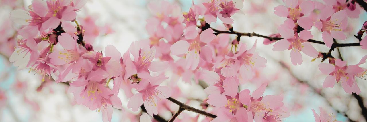 Springflowers Harem S Kozmetik Cosmetic Antalya